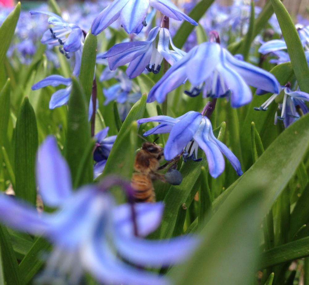 Beauteous, Bountiful, Botanical Blue! (1/6)