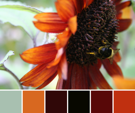 Autumnal color palette from a busy bee on a sunflower.