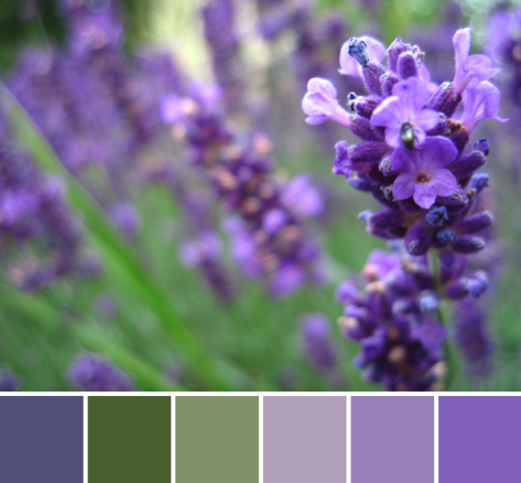 lavender color palette