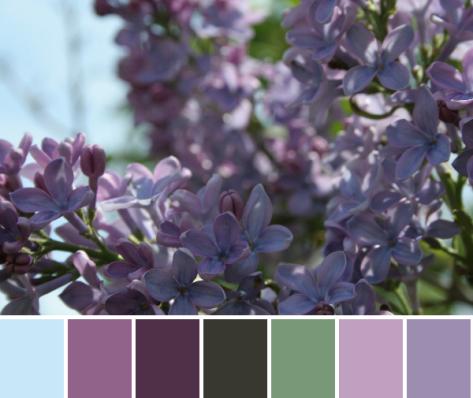 purple color palette lilacs