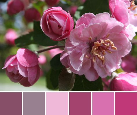 pink palette color inspiration