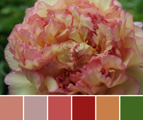 peach pink color palette