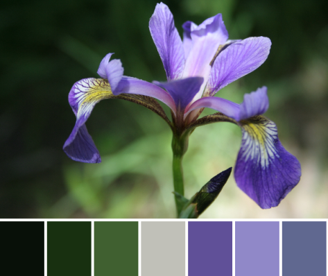 iris color palette