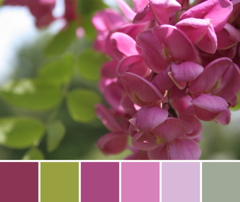 fuschia flower color palette pink