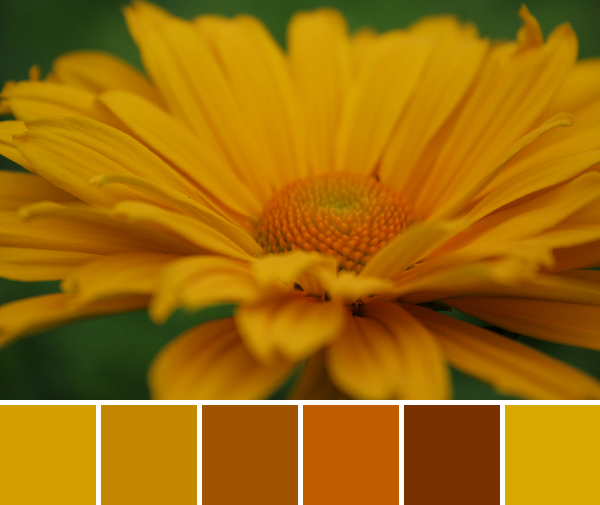 Color Inspiration Thursday {9} (2/3)