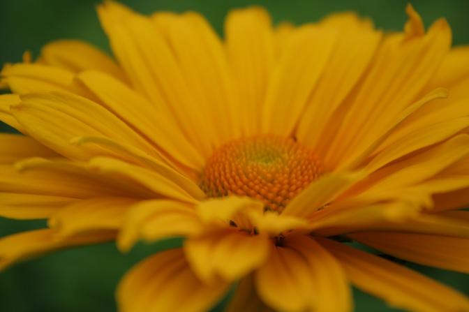 yellow flower sunny