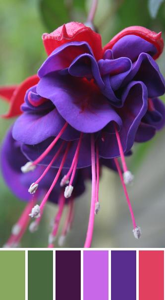 pink purple flower palette