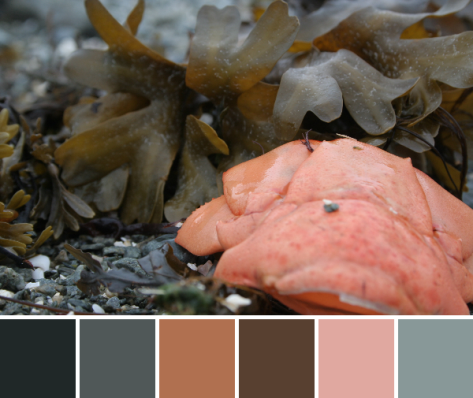 lobster maine coast color palette