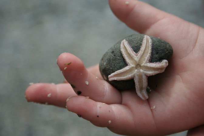 child wonder at a starfish from the coast of maine