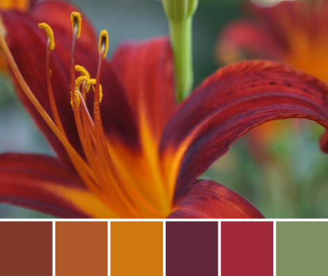 tiger lily palette red and orange