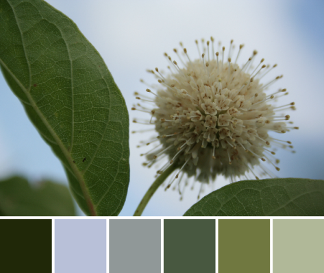 buttonbush color palette