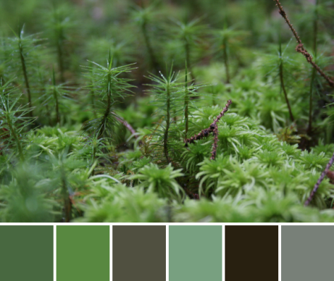 lichen moss color palette