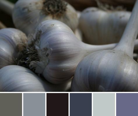garlic color palette