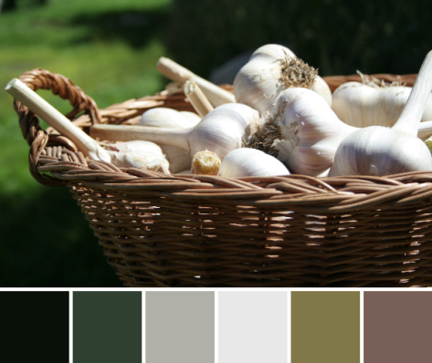 garlic color palette