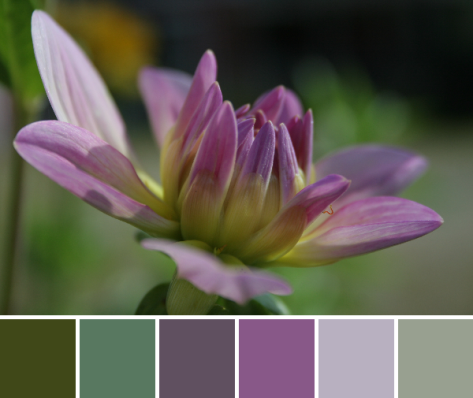 dahlia color palette with inch worm