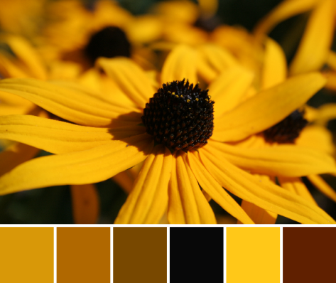 sunny yellow color palette