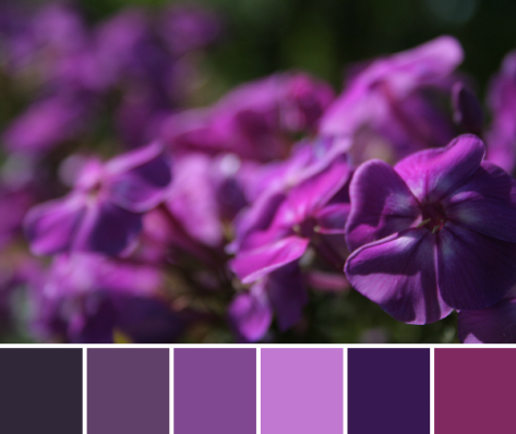 magenta purple color palette