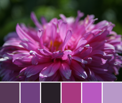 magenta flower color palette