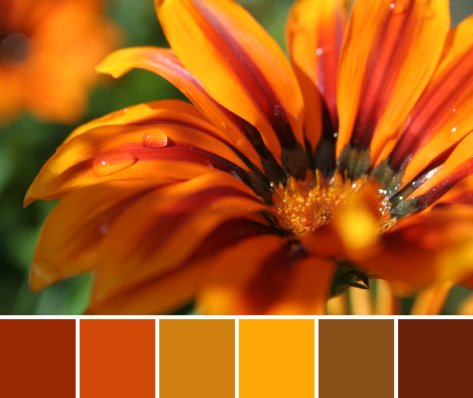 sunny flower color palette