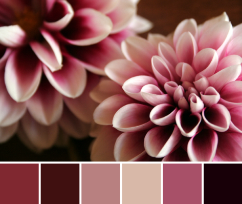 dark dahlia color palette