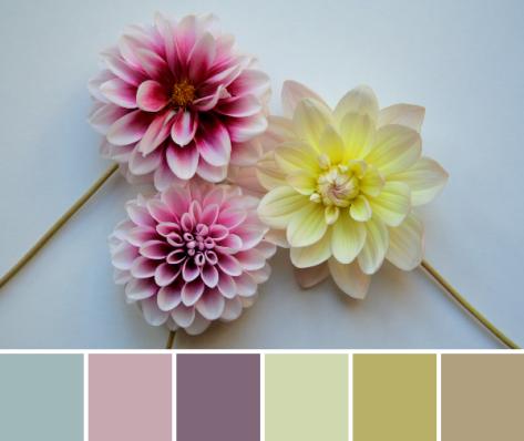 pastel dahlia color palette