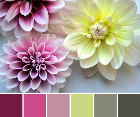 dahlia color palette