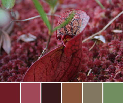 crimson pitcher plant color palette