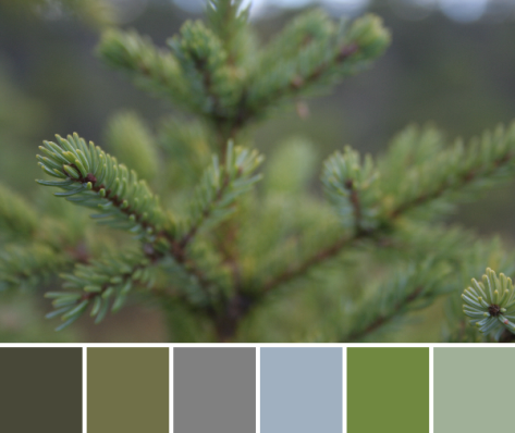 evergreen color palette