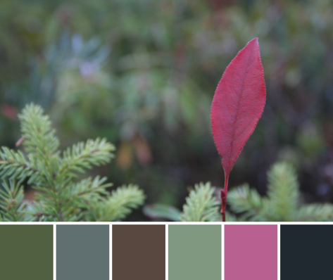 red leaf pop color palette