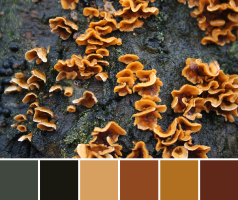 slime mold color palette