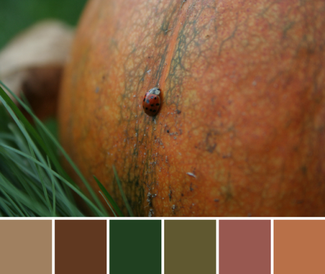 pumpkin ladybug autumn color palette