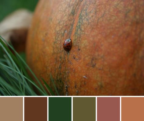 pumpkin ladybug autumn color palette