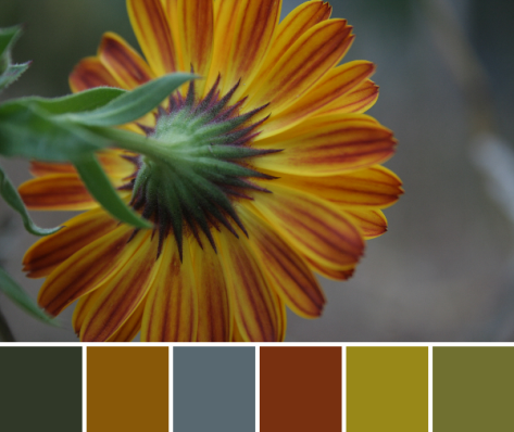 flower autumn color palette