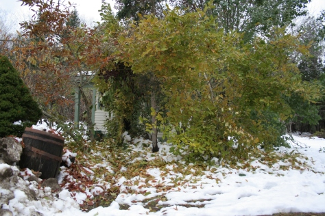 snow storm damage in maine