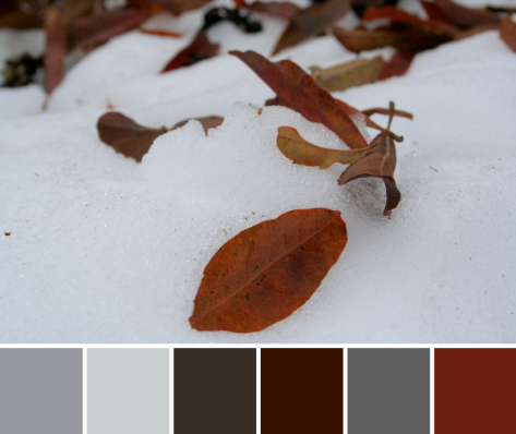 fall snowy color palette leaves red