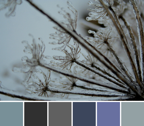 icy queen anne's lace color palette