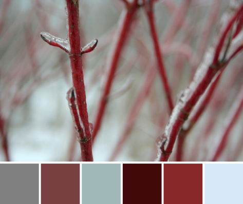 red osier dogwood color palette