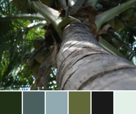 palm tree cozumel color palette