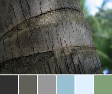 palm tree texture color palette