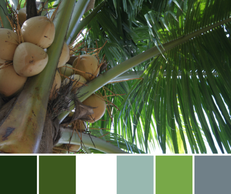 palm tree color palette