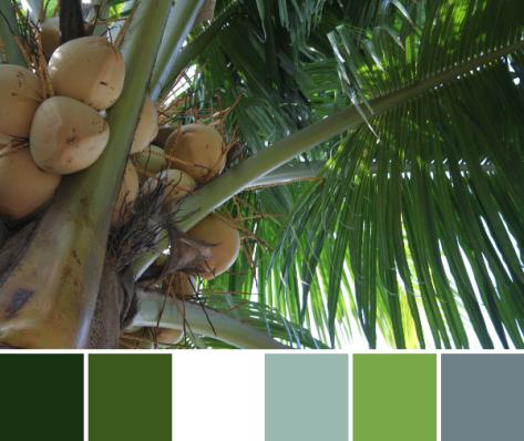 palm tree color palette
