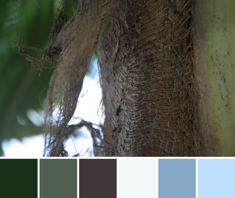 palm tree texture color palette