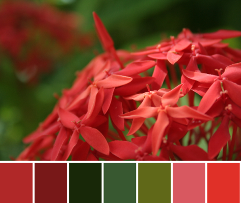 belize flowers color palette