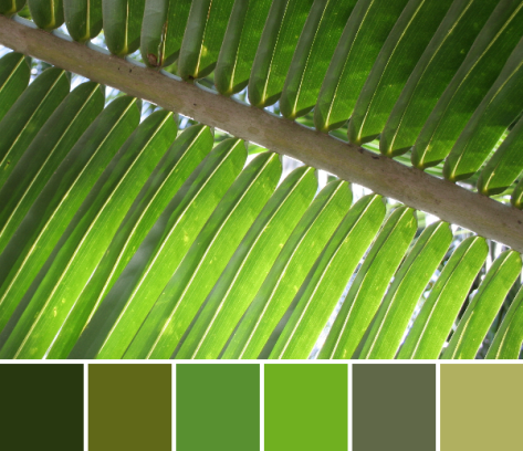 green palm leaf color palette