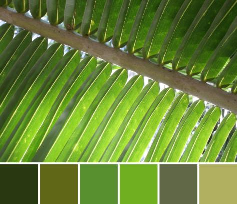 green palm leaf color palette