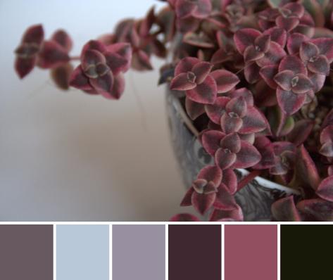 marsala color palette