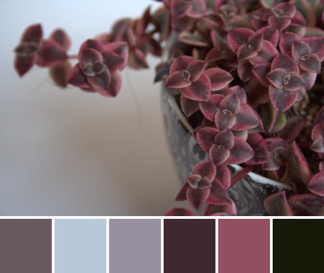 marsala color palette