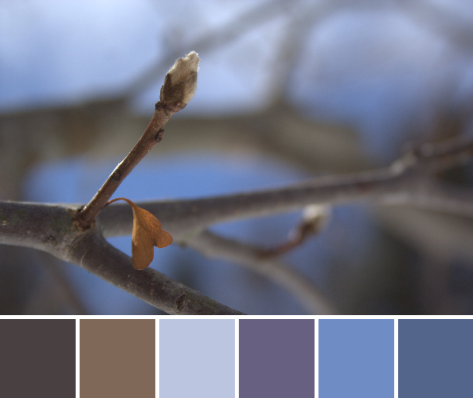 blue sky buds color palette