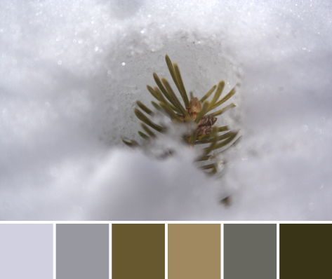 pine branch in the snow color palette