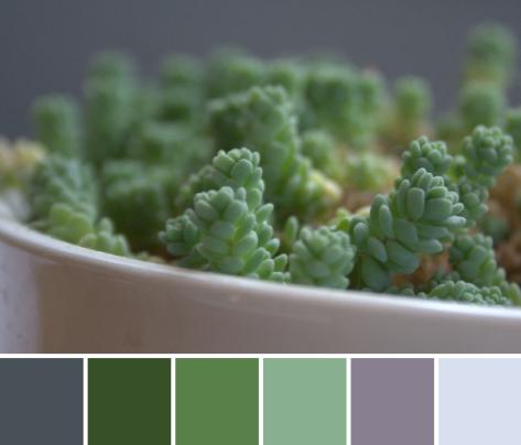 green color palette succulent